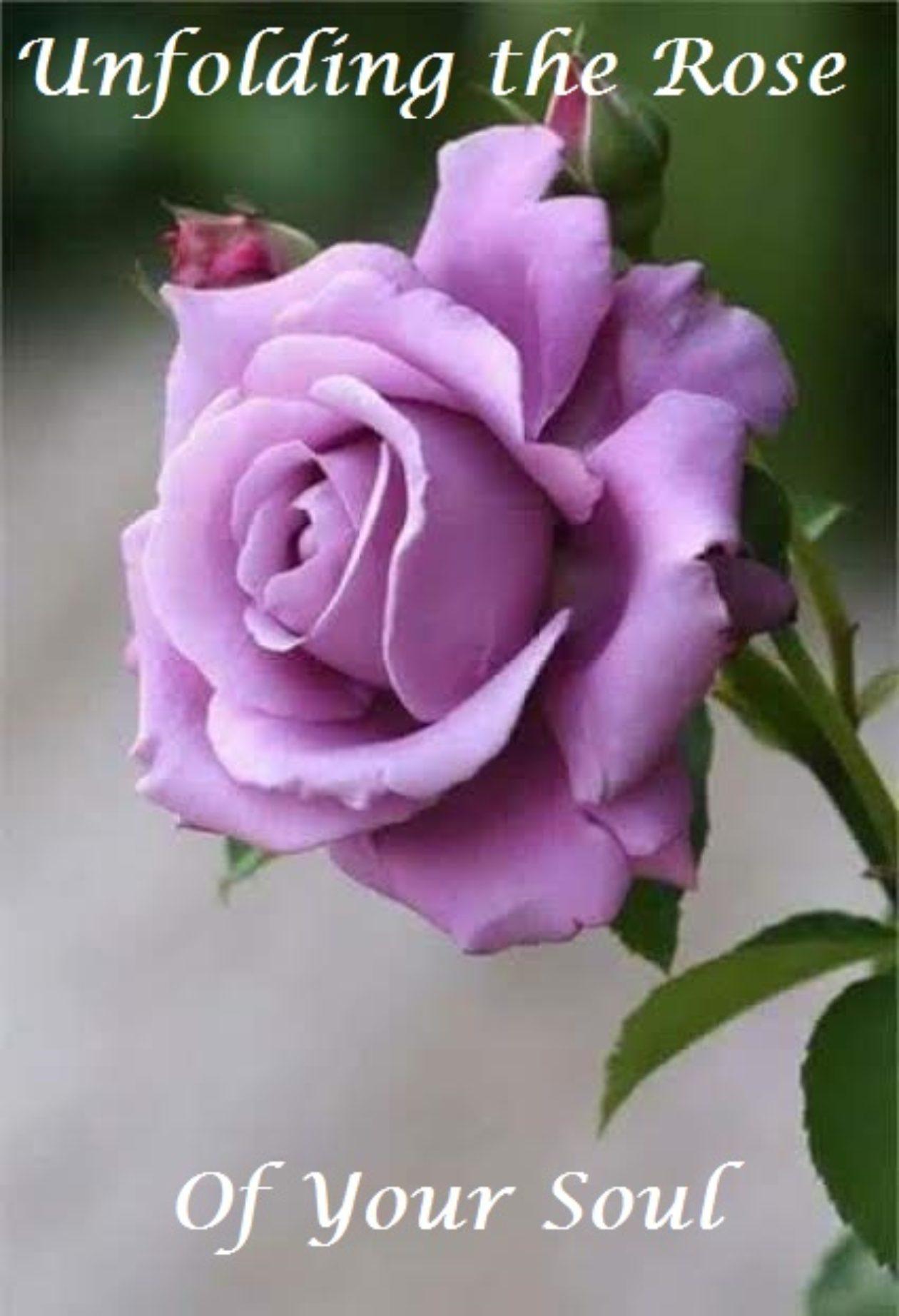 Sarasota Rose